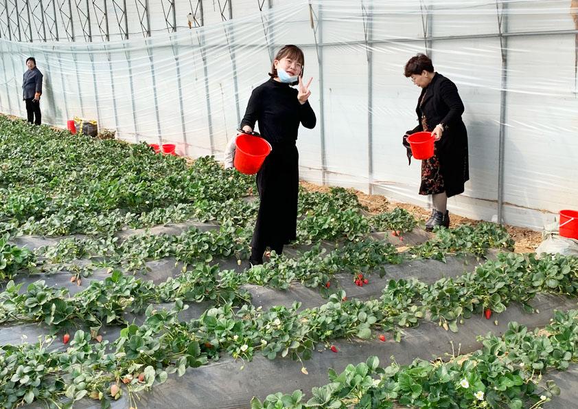 """博阳机械开展""""三八""""妇女节摘草莓活动"""